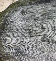 According to an Old English manuscript, in 774 AD a red crucifix appeared in the skies over Britain. Scientists have long posited that it was the result of a distant supernova. Such an event would have recorded an increase of radiation in Earth's geology. Recently, Japanese scientists found tree rings from 774 that indicate an increase in C-14. This could be the proof that scientists have been looking for, but more is needed. Until it is found we might never know what caused the phenomenon.