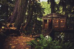 Yes, you can stay here.  Treehouse Point, Snowqualmie Valley, WA.