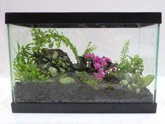 Easy House Plants, Saintpaulia, Houseplants, Container Gardening, Indoor Plants, Terrarium, Bloom, Beautiful, Design