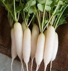 David's Garden Seeds Radish White Icicle (White) 200 Organic Heirloom Seeds