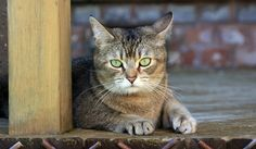 Sehtraining als Entspannungs-Tool Burn Out, Relax, Cats, Animals, Gatos, Animales, Animaux, Animal, Cat