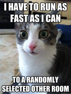 kitty logic