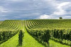 Franciacorta Tour is a specialized travel agency that organize wine tours in Franciacorta's cellars. Discover the Franciacorta taste with expers local guide Marsala, Opera, Vineyard, Tours, Italy, Green, Outdoor, Follower, App
