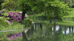 beautiful pond flowers wallpaper download full free high size resolution