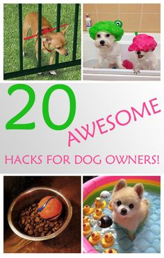 20 Awesome Hacks For Dog Owners!
