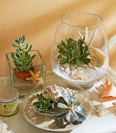 Put succulents in mini desert or beach landscapes. Click for more indoor plant display ideas.