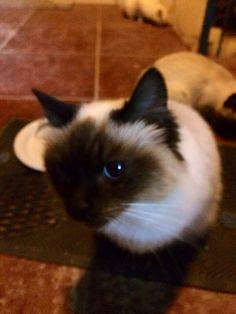 A sweet cat ❤️