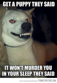 funny demon dog red eyes