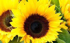 Zonnebloempitten zijn pure voedingsbommen. Rijk aan Vitamines B, E en de mineralen calcium, selenium, magnesium, zink. Ze bevatten enorm veel antioxidanten