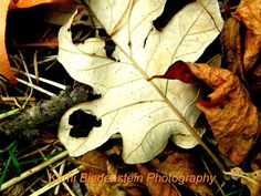 Autumn Heart Leaf Photography by JosiesDaughter on Etsy, $4.00