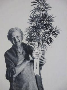 First Prize Grandma with Marijuana Plant Poster 1971.Nana!