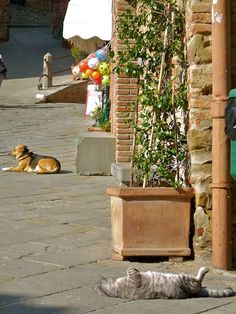 Alice and Tigre in Panicale Perugia Umbria