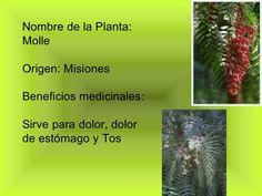 plantas-medicinales-8-728.jpg (728×546)