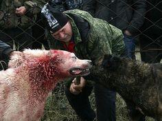 За жестокое обращение с животными предлагается ввести уголовное наказание