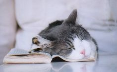 Nothings better than to curl up with a good book or have forty winks, or perhaps both!