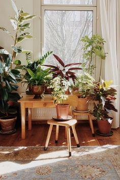 urban jungle @home
