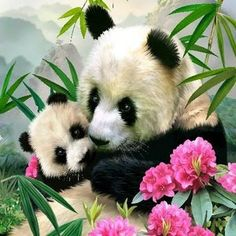 Enjoy an interesting drawing process to obtain a really liked result. Your picture will be incredibly beautiful at the end of the DIY Painting By Numbers Animals Panda Acrylic. Panda Bebe, Cute Panda, Panda Painting, Diy Painting, Cute Baby Animals, Animals And Pets, Baby Pandas, Wild Animals, Red Pandas