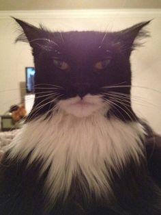 Funny Pictures - This cat looks like Batman