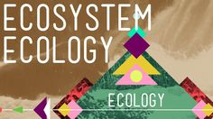 Ecosystem Ecology: Links in the Chain – Ecology #7
