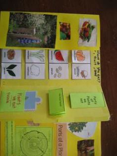 Pictures and description, including resources for a plants lapbook. See all the different categories of the mini books we made. Nature Study, Choose Joy, Interactive Notebooks, Mini Books, Science And Nature, Book Activities, Botany, Projects To Try, Product Description