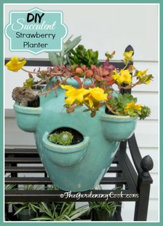 Step by step tutorial. This strawberry planter is planted with succulents for a charming effect. See the DIY project at thegardeningcook.com/succulent-strawberry-planter