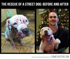 The rescue of a street dog…love her smile!