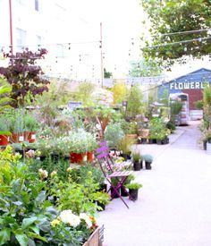 The cafe is situated in Flowerland Nursery, which was first opened in the 1940s. The current owner, Carly Dennett, bought Flowerland abou...