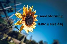 A collection of Beautiful Good Morning Images, beautiful good morning pictures, whatsapp good morning images and quotes. Sweet Good Morning Images, Morning Images In Hindi, Good Morning Picture, Morning Pictures, Happy Birthday Images, Cool Baby Stuff, Good Day, Funny Quotes, Romantic