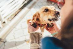 Los perros no pueden hablar, pero sienten mucho por nosotros. Hay 10 cosas que tu perro quiere que sepas y nosotros te las vamos a contar.