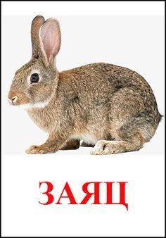 Животные картинки для детей Gernal Knowledge, I Can Do It, Craft Sale, Homeschool, Bunny, Birds, Suddenly, Children, Rabbit