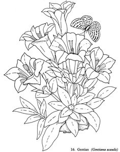 Welcome to Dover Publications - Redouté Flowers Coloring Book