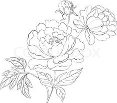 drawing of a peony