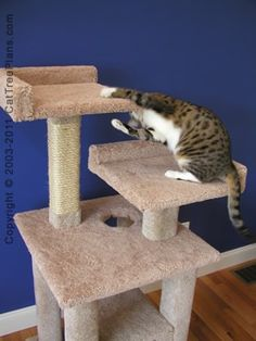 Photo of /images/cat-tower-plans-2-detail-6.jpg