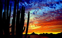 San Carlos Sonora was the perfect place. Description from whotalking.com. I…