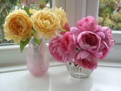 beauties from a garden @Kat at Secretsofabutterfly