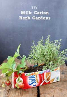 DIY Milk Carton Herb Gardens - Tutorial - Great for starting seeds and gifts too! BoulderLocavore.com