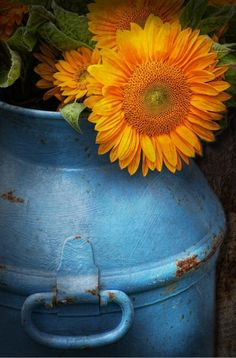 Reminds me of the milk cans we had growing up on the farm! Now I have one on my front porch so I never forget my roots! Happy Flowers, Beautiful Flowers, Sun Flowers, Meadow Flowers, Summer Flowers, Beautiful Things, Sunflowers And Daisies, Milk Cans, Milk Jug