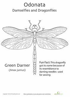 Worksheets: Odonata Coloring Page
