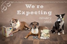 Pregnancy announcement ideas with my dogs -