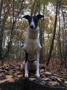 Lurcher Dog T towel  Gift//Present Tea Towel Greyhound Wolfhound Deerhound
