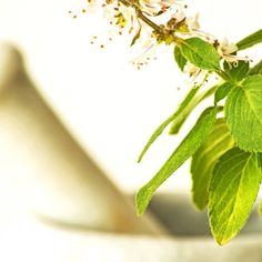7 Adaptogen Herbs to Lower Cortisol