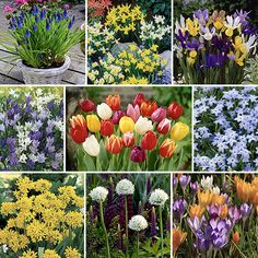Spring Flowering Bulbs 5 Lessons That Will Teach You All You Need To Know About Spring Flowering Bulbs Flower Lamp, Flower Lights, Gladiolus Flower, Spring Flowering Bulbs, Tulip Bulbs, Garden Maintenance, Bulb Flowers, Light Bulb Types, Garden Soil