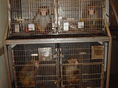 Tell AirBridgeCargo Airlines to Adopt a Ban on Transporting Monkeys for Experimentation!
