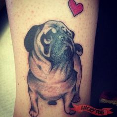 Leg pug tattoo by Kim at Lucky 13, Northampton, UK - www.luckypug.com