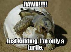 The Birth of a Ninja Turtle