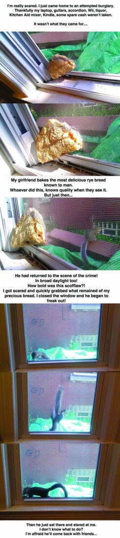 Animal burglary attempt