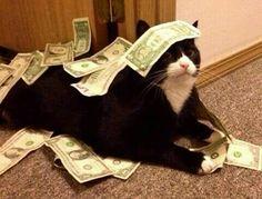 Too much money. #lol #cat