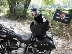 OMG! Easy Rider!