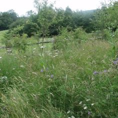 Creating a wild flower meadow