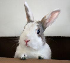 Kanínur / Rabbits photo gallery